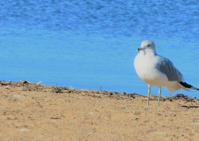 birdzilda
